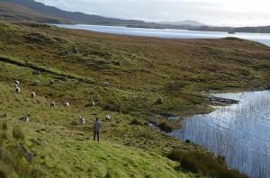 Cocu le berger, Connemara - 26.10.2016, BIT 2016